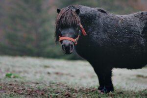 Obese Pony